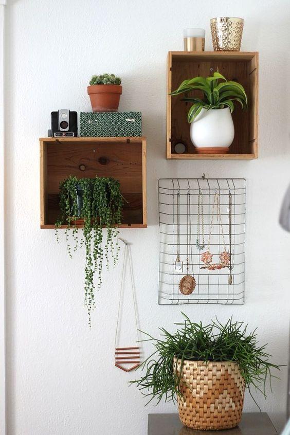 Indoor Plant 3